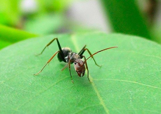 бианки как муравьишка домой спешил читательский дневник
